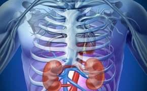 Medicinální houba Cordyceps v boji proti chronickému onemocnění ledvin