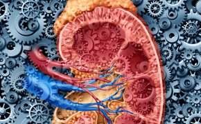 Cordyceps a léčbě nefritid