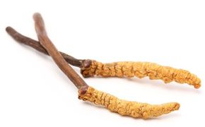 Cordyceps  snižuje fibrózu plic