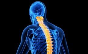 Cordycepin a ochrana rozhraní krev mozek při poranění míchy