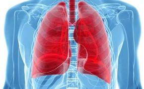 Cordycepsem proti fibróze plic