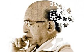 Maitake zlepšuj paměť poškozenou stářím, a to díky antioxidačním účinkům