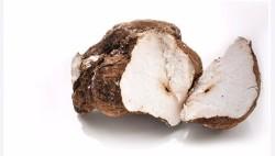 Wyciąg Poria Cocos 30%
